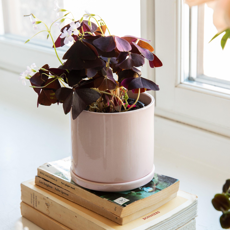 Burk Keramik Rosa