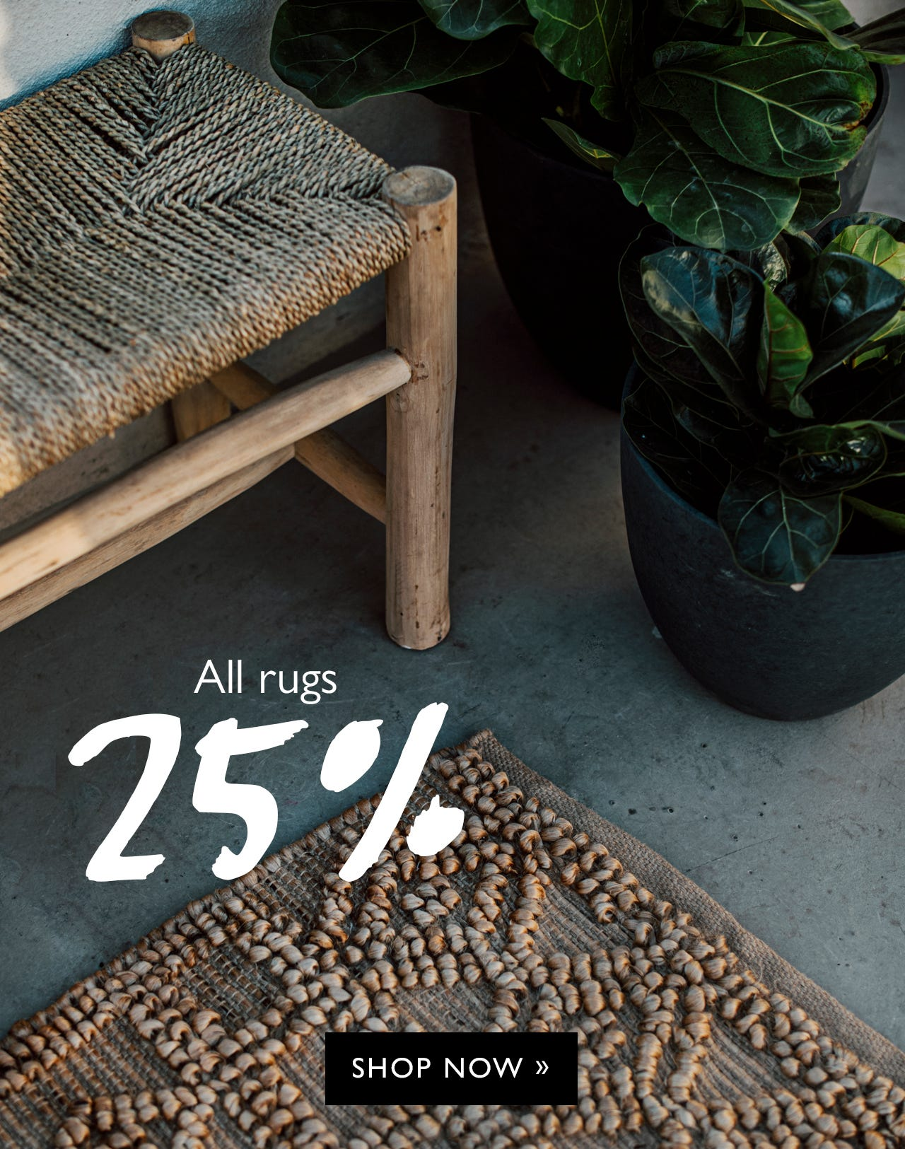 25% off on all rugs