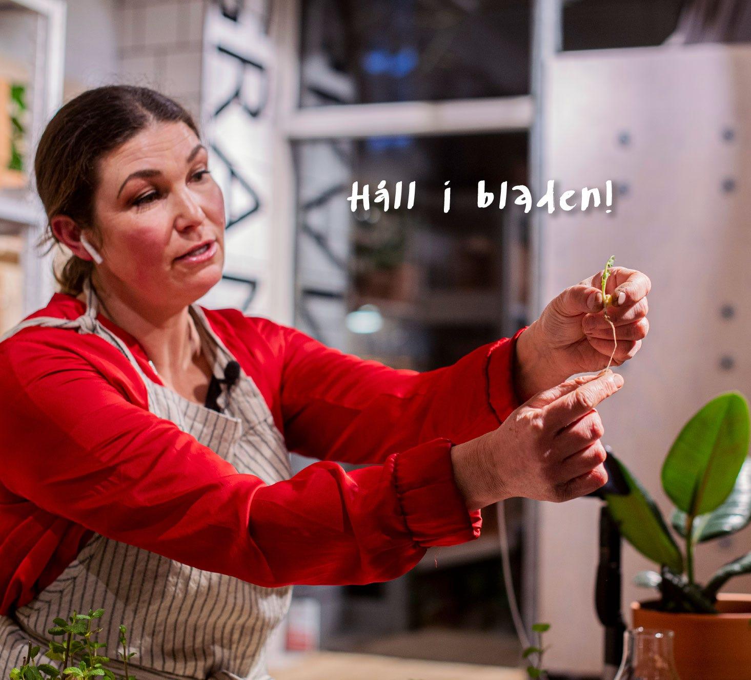 Håll i plantans blad för att inte täppa till tillförseln till plantans rot.