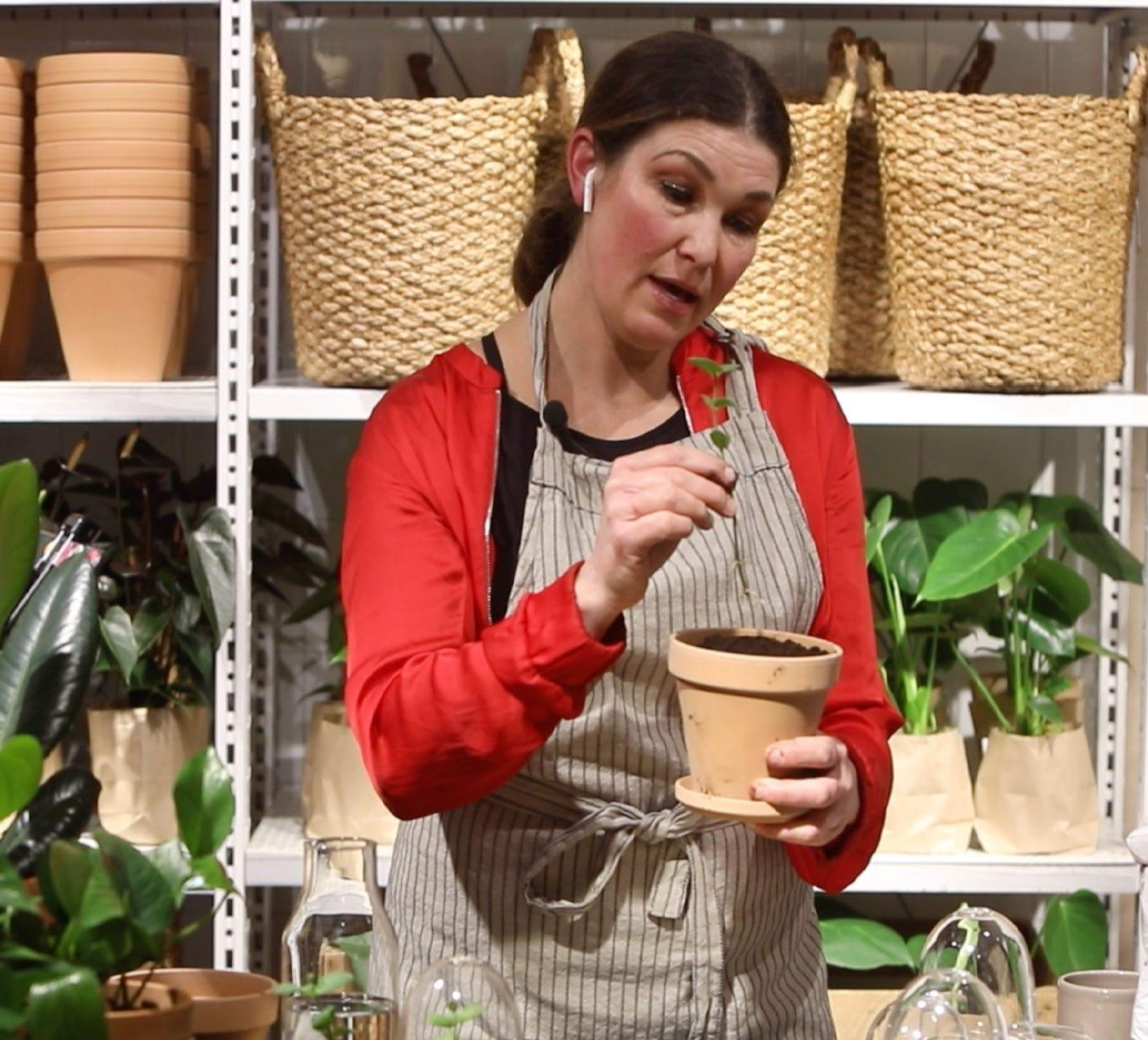 Placera ner plantan i hålet och tryck försiktigt till runt om.